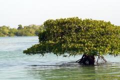 Reif-für-die-Insel-2017-5